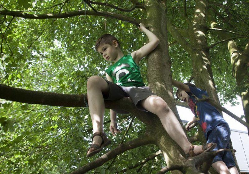 Hoog in de boom geklommen